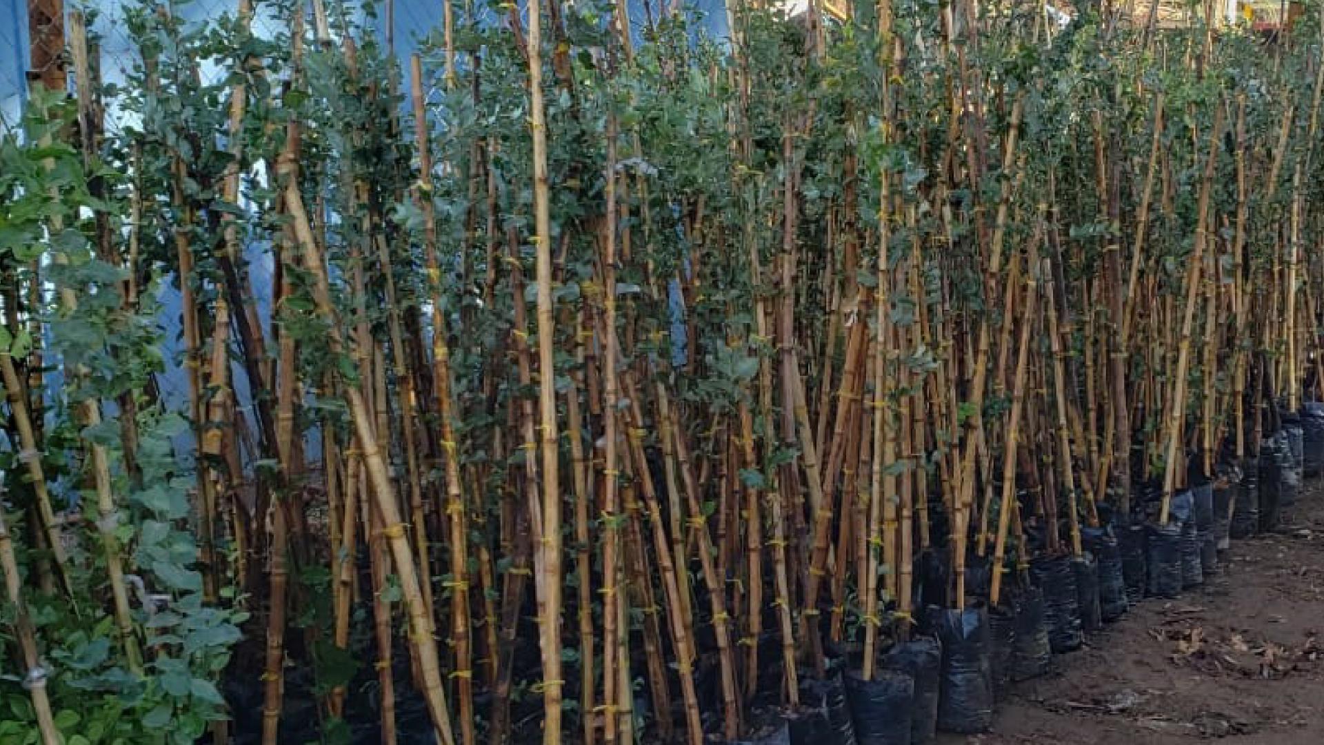 Convenio entre ISA Interchile e INIA permitirá la reforestación de más de 100 mil especies  a partir de 2022